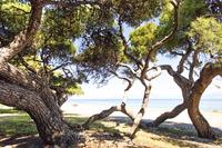 Daphne_Beach