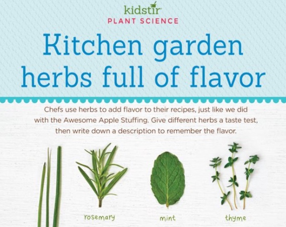 kitchen garden herbs flavor kids