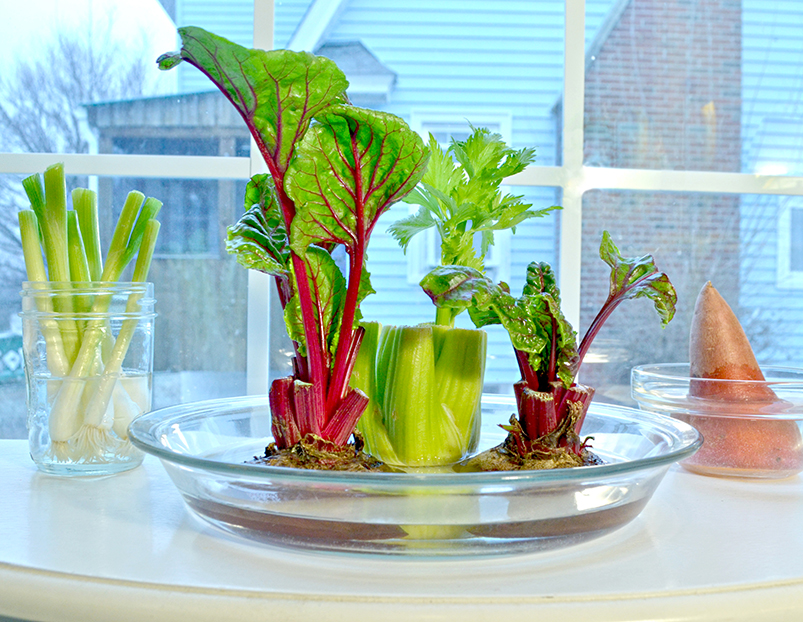 Grow Plants from Veggie Scraps