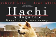 Preview hachi article