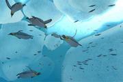 Preview ocean article