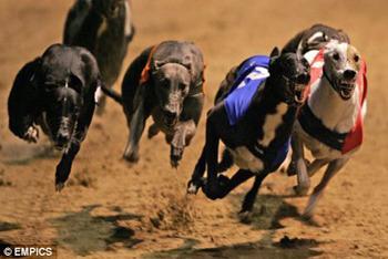 Greyhound Derby