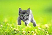 Preview kitten preview