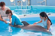 Preview dolphin tale pre