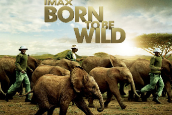 Born to Be Wild on Blu-Ray and DVD