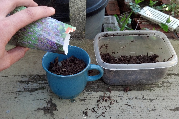 Fill the Teacup with Soil, Sprinkle Seeds and Grow You Mom a Gift