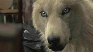 Elena as a beautiful wolf