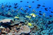 Preview biomes aquatic pre