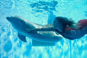 Preview dolphin tale bethany pre