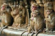 Preview disneynature monkey kingdom pre