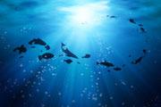 Preview oceans pre