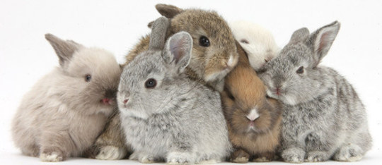 Feature rabbits feature