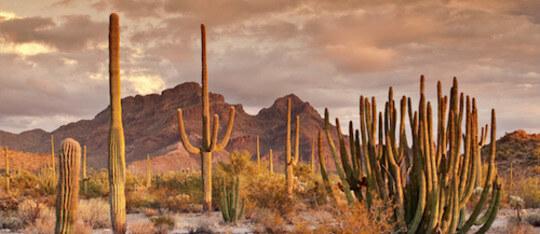 Feature desert feature