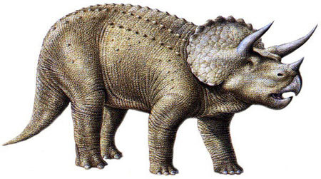 Single horned triceratops