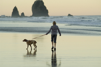 Get outside and walk your dog!