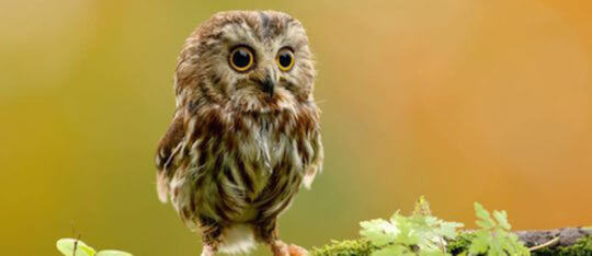 Feature owls feature
