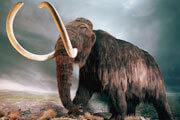 Preview woolly mammoth pre