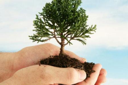 Arbor Day | Tree Planting | April Holiday | Environment ...