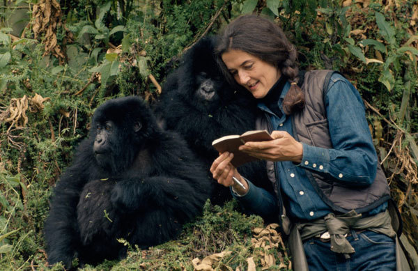 Dian Fossey in the mountains of Rwanda