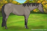 Horse Color:Smokey Grullo