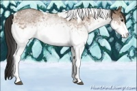 Horse Color:White Spotted Buckskin Roan Tobiano