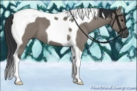 Horse Color:Grullo Tobiano