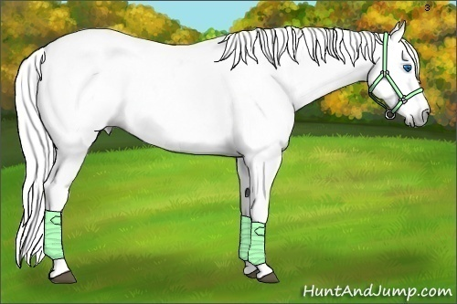 Horse Color:Gray Roan Splash Tobiano