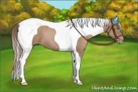 Horse Color:Black Pearl Tobiano
