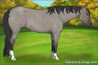 Horse Color:Grullo Roan