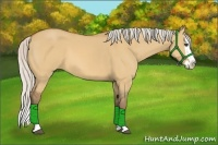 Horse Color:Silver Bay Dun Splash