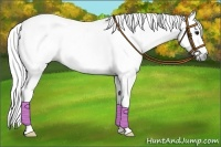 Horse Color:Gray Splash Tobiano
