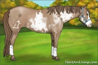 Horse Color:White Spotted Black Pearl Splash Frame