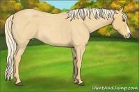 Horse Color:Palomino Roan Splash