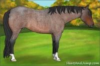 Horse Color:Bay Roan