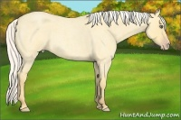 Horse Color:Silver Amber Cream Champagne Roan Dun