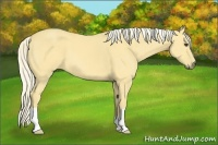 Horse Color:Palomino Dun