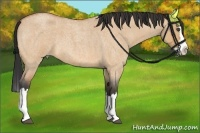 Horse Color:Bay Roan Dun Splash