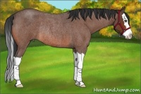 Horse Color:Bay Roan Splash Rabicano