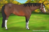Horse Color:White Spotted Bay Roan