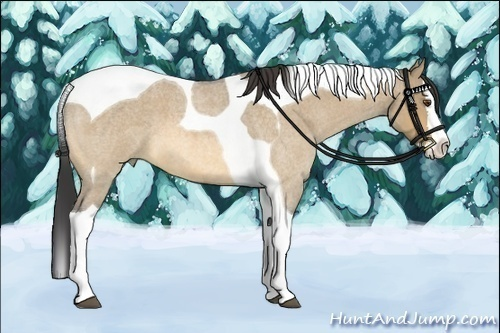 Horse Color:Buckskin Roan Dun Splash Tobiano