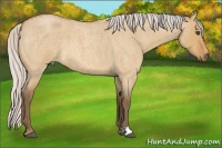 Horse Color:Silver Bay Roan Dun