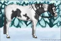 Horse Color:Black Splash Tobiano Frame
