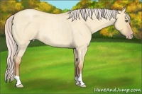 Horse Color:Silver Amber Champagne Roan Dun