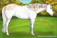 Horse Color:Silver Amber Champagne Pearl Splash Rabicano