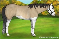 Horse Color:Bay Dun Splash Rabicano