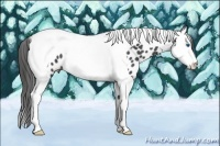Horse Color:Black Splash Tobiano Appaloosa Rabicano