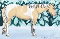 Horse Color:Gold Cream Champagne Tobiano