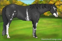 Horse Color:White Spotted Black Splash Frame
