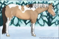 Horse Color:White Spotted Amber Champagne Tobiano