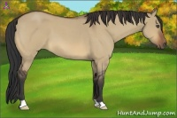 Horse Color:Bay Roan Dun